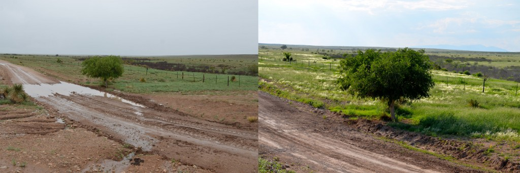 Near the cattle guard. Left taken two weeks ago, right taken yesterday.