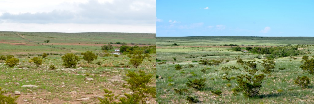 Looking out from the hill above Tye and Becca's house.  Left taken two weeks ago, right taken yesterday.