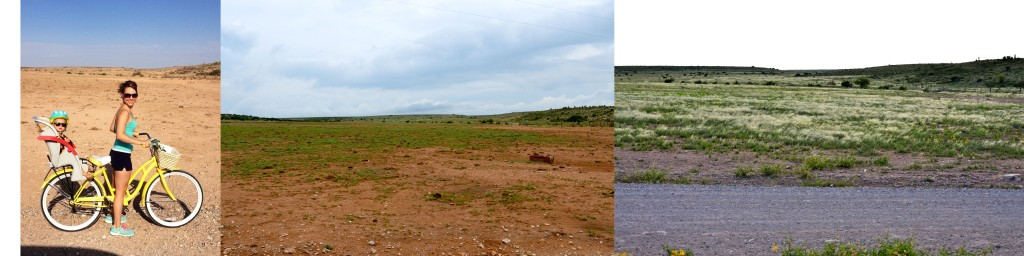 The photo on the far right was taken the day before it rained, nothing in the pasture but dirt! The middle photo was taken two weeks ago, and the photo on the far right was taken yesterday.  It's amazing how much it has changed in one month!