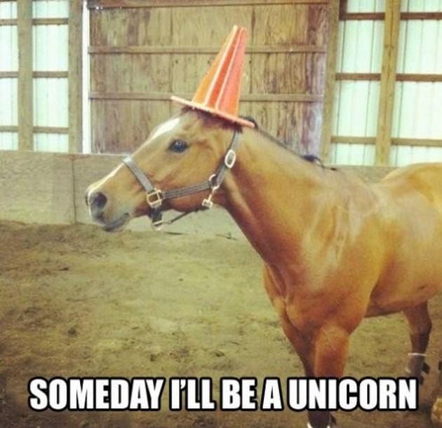Funny-Horse-Memes-10